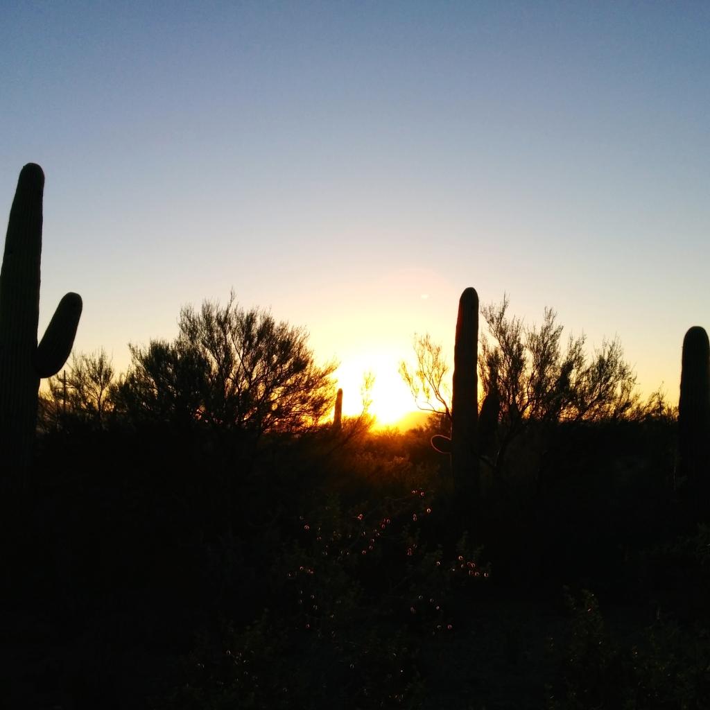 saguaro-morning