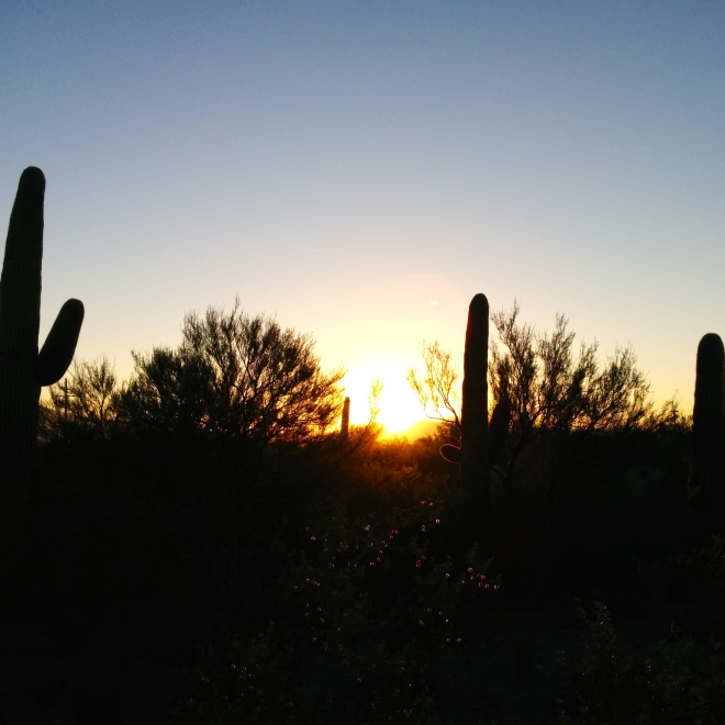 saguaro-morning
